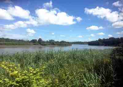green marshlands to front, river suir in background, cblue sky with white puffy clouds.