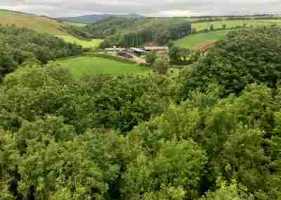 View of treetops from Ballyvoile Viaduct over River Dalligan Valley